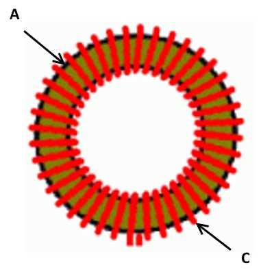 Конструкция тороидального импульсного трансформатора