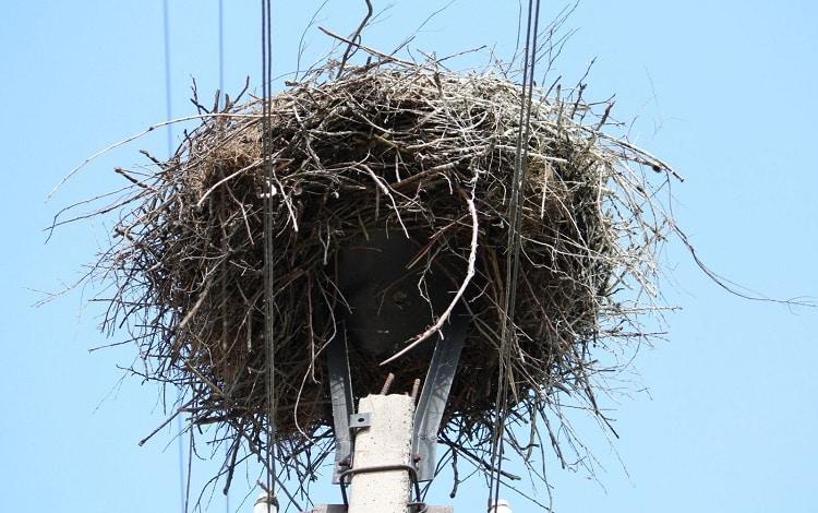 Гнездо на опоре