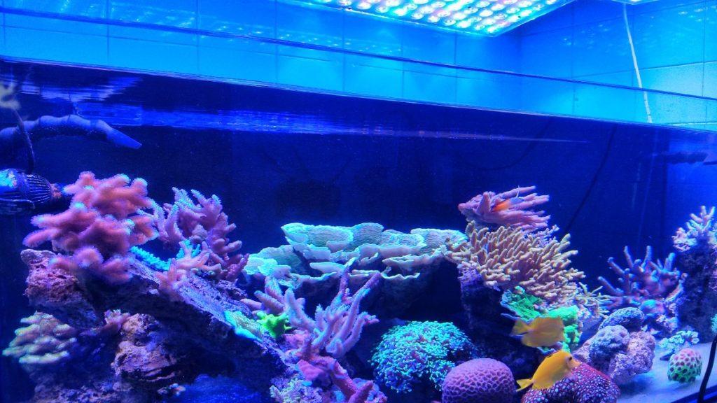 Пример led освещения аквариума