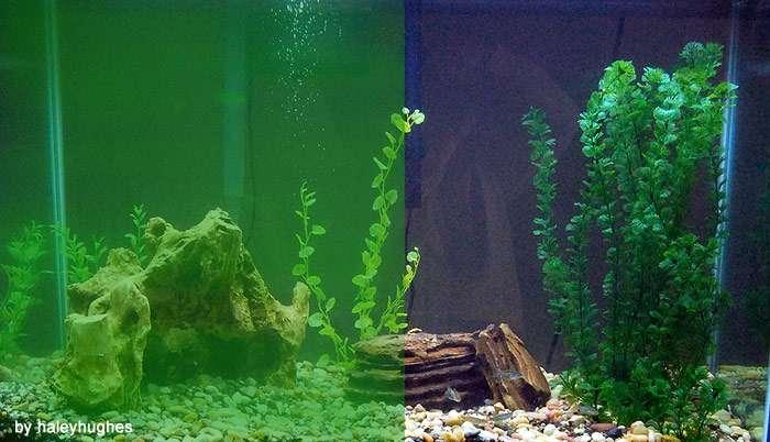 Сравнение светопроницаемости цветущей и прозрачной воды