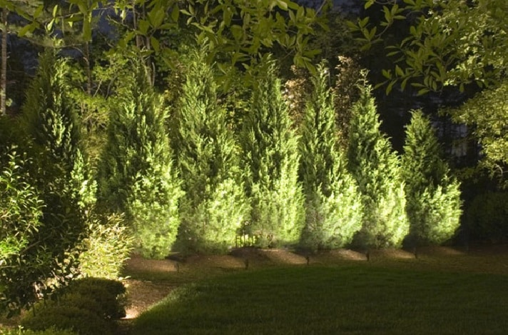 Подсветка деревьев